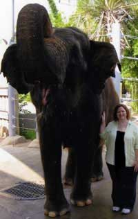 Lynne Kelly and her own Nandita elephant